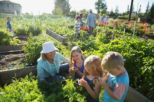 Grandmother and grandchildren tending plants in community gardenの写真素材 [FYI02278830]