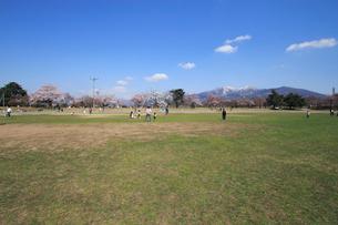 桜咲く村松公園内の村松陸上競技場の写真素材 [FYI02280289]