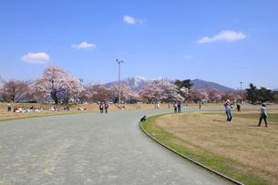桜咲く村松公園内の村松陸上競技場の写真素材 [FYI02280532]