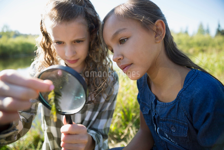 Curious girls examining plant with magnifying glassの写真素材 [FYI02281054]