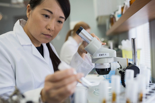 Focused medical scientist working at laptop in laboratoryの写真素材 [FYI02283033]