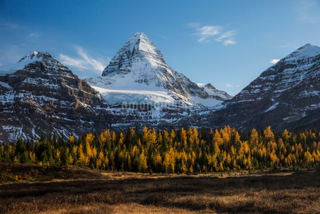 Autumn trees below majestic snowy mountainの写真素材 [FYI02283459]