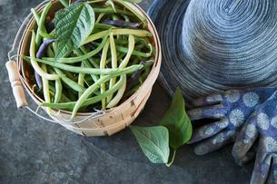 Still life of fresh runner beans in bushel next to gardening gloves and hatの写真素材 [FYI02283724]
