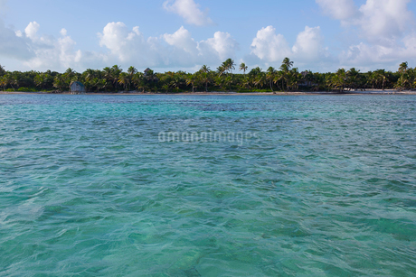 Tropical ocean with palm trees on beach in backgroundの写真素材 [FYI02284145]