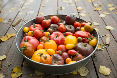 Still life variety fresh organic tomatoes in bowlの写真素材 [FYI02284296]