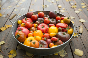 Still life variety fresh organic tomatoes in bowlの写真素材 [FYI02284296]