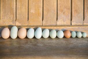 Fresh organic multicolor eggs in a rowの写真素材 [FYI02284591]