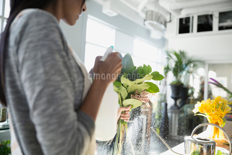 Florist misting leaves with water in flower shopの写真素材 [FYI02284813]