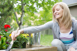 mature woman staining wooden flowerbed outdoorsの写真素材 [FYI02285849]