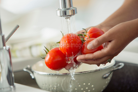 Mid-adult woman rinsing tomatoes in sink with colander.の写真素材 [FYI02286072]