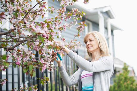 mature woman pruning treeの写真素材 [FYI02286403]