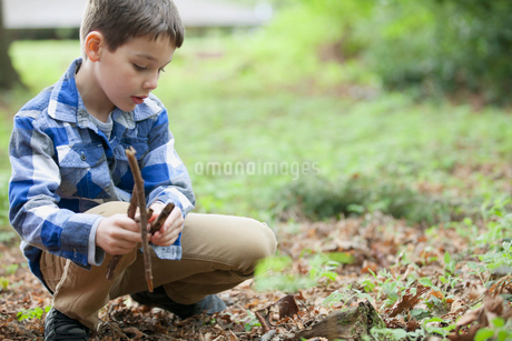 young boy collecting kindlingの写真素材 [FYI02286963]