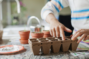 woman planting seedsの写真素材 [FYI02287633]