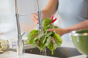 Woman rinsing rhubard in sink.の写真素材 [FYI02287635]
