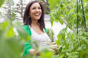 pretty, mid adult woman tending her gardenの写真素材 [FYI02287706]
