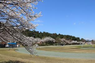 桜咲く村松公園内の村松陸上競技場の写真素材 [FYI02287914]