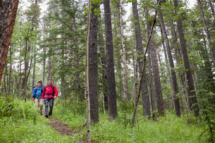 three male backpackers hiking in the woodsの写真素材 [FYI02288539]