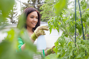 pretty mid adult woman spraying her gardenの写真素材 [FYI02289375]