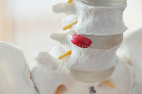 closeup view of anatomical model of spineの写真素材 [FYI02290123]