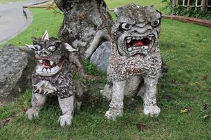 沖縄県宮古島のシーサーの写真素材 [FYI02290216]
