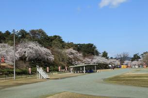 桜咲く村松公園内の村松陸上競技場の写真素材 [FYI02290220]