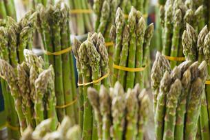 Bundled asparagusの写真素材 [FYI02290279]