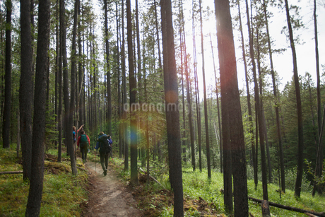 view from behind of three backpackers on a woodland trailの写真素材 [FYI02290494]