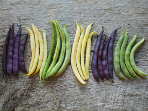 Row of colored beans side by sideの写真素材 [FYI02290823]
