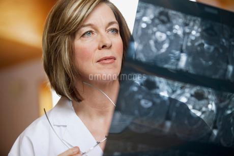 doctor reviewing xraysの写真素材 [FYI02291131]