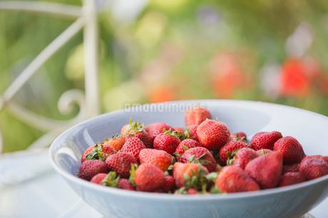 Fresh strawberries in bowlの写真素材 [FYI02291384]