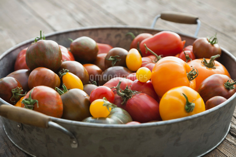 Freshly picked Tomatoes in colanderの写真素材 [FYI02291563]