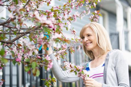 mature woman pruning treeの写真素材 [FYI02291606]