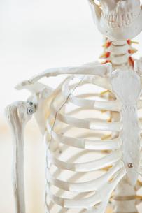 closeup of anatomical modelの写真素材 [FYI02291998]