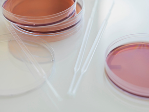 Close-up of petri dishes and pipetteの写真素材 [FYI02292295]