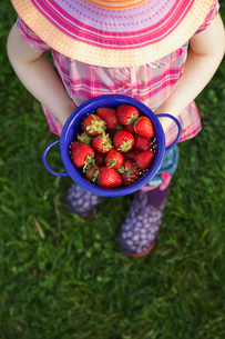 High angle view of girl holding fresh strawberries in colanderの写真素材 [FYI02292353]