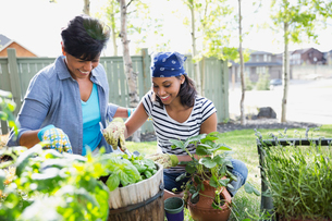 Mother and adult daughter gardening togetherの写真素材 [FYI02293180]