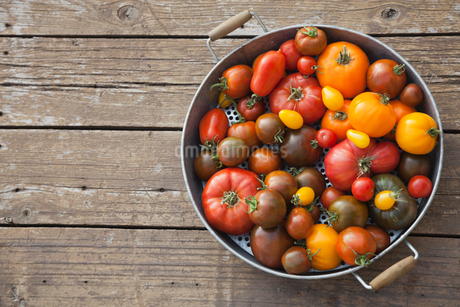 Freshly picked Tomatoes in colanderの写真素材 [FYI02293193]