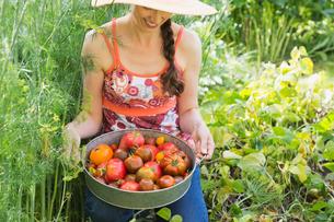 Woman holding fresh Tomatoes in gardenの写真素材 [FYI02293688]