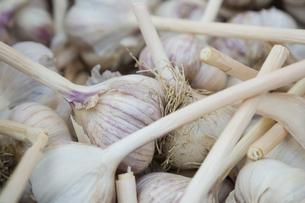 Fresh garlic bulbsの写真素材 [FYI02294080]