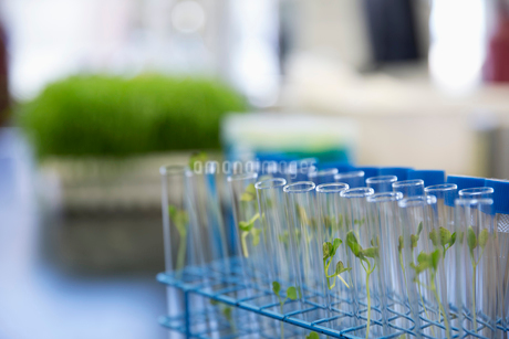 Seedlings sprouting in test tubes in laboratoryの写真素材 [FYI02294795]