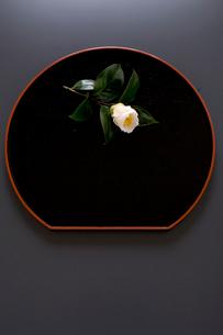 白玉椿の写真素材 [FYI02294799]