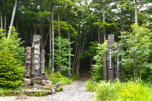 八ヶ岳・白駒の池入口の写真素材 [FYI02297122]