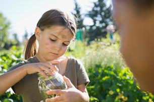Little girl catching bugs in community garden with jarの写真素材 [FYI02299840]