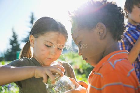 Children catching garden bugs in jarの写真素材 [FYI02301341]