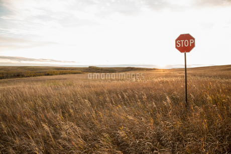 Stop sign on fieldの写真素材 [FYI02301594]