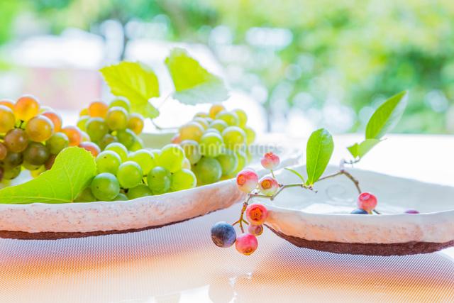 白い陶器の器とブルーベリーとブドウの写真素材 [FYI02306312]