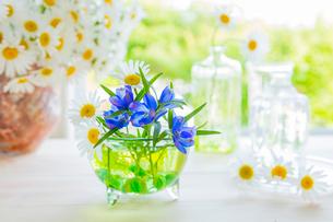 マーガレットとデルフィニウムとガラスの花瓶の写真素材 [FYI02306464]
