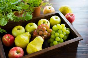 秋の果物と木箱と野菜苗の写真素材 [FYI02306530]