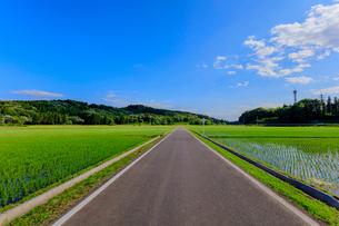 農道と水田と青空の写真素材 [FYI02306575]