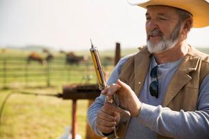 Cattle rancher preparing vaccinationの写真素材 [FYI02307088]